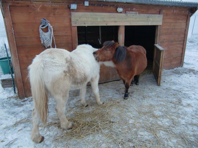 Frieda und Lotti