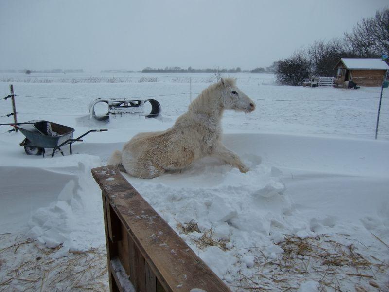 Frieda im Schnee