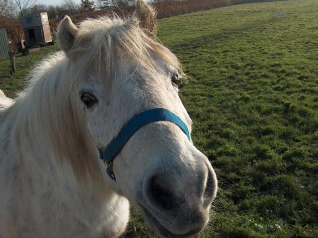 Pony Momo