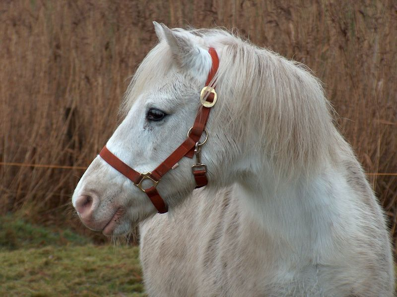 Pony Frieda