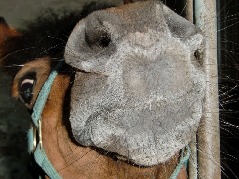 Pony Lottis Schnute :-)