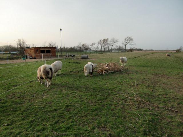 1 Hektar Weide